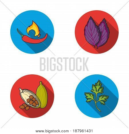 Chili, basil, cocoa beans, parsley.Herbs and spices set collection icons in flat style vector symbol stock illustration .