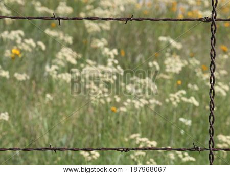 A rusty barbed wire fence section frames a blurred background of white and yellow wildflowers. For use as background or border.