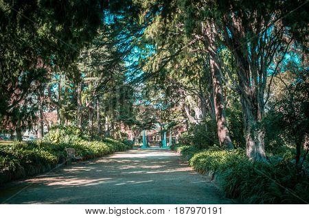 Quiet Alley In St. Kilda Botanical Gardens.