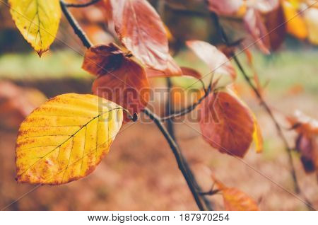 Yellow Autumn Leaves On A Branch In Nice Muted Colors And Blurred Background.