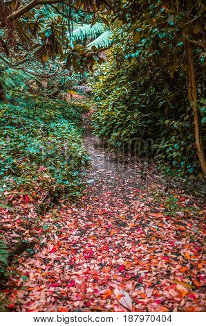 Small Hidden Pathway In A Forest Coverd In Red Autumn Foliage.