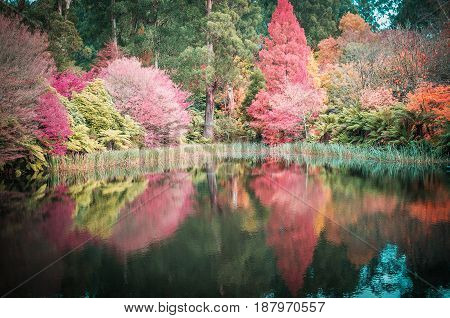Beautiful Red, Orange, And Yellow Trees Reflecting In The Water In Autumn.