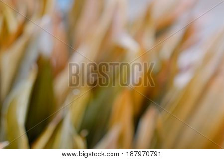 Blurred Of Dried Grass At The Winter