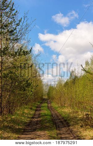 Road in the forest on a sunny spring day