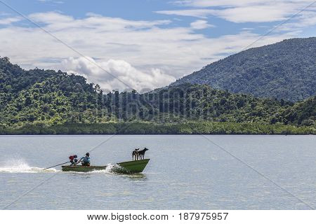 Trat Thailand - May 11th 2017; 2 dogs on the head of sailing long tail boat in the bay of koh Chang (Chang Island) in sunny day blurred green trees mountain and blue sky background.