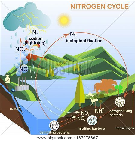 Scheme of the Nitrogen cycle, flats design vector illustration