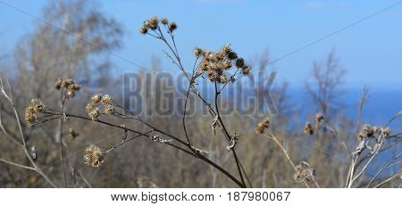 Dry plants in early spring. Landscape with river and trees on the background.