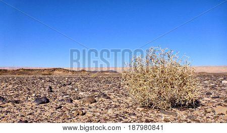Rolling Stone In Negev Desert