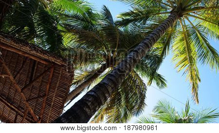 Tropical palm trees over clear blue sky