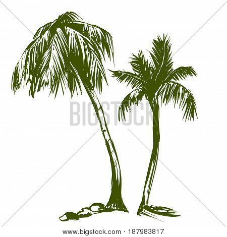 palm collection cartoon hand drawn vector illustration sketch