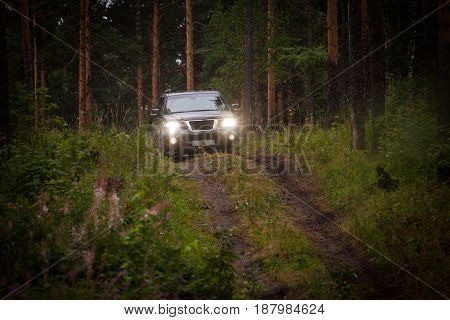 Horizontal outdoors shot of offroad car driving in coniferous wood.