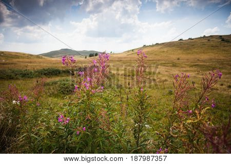 Mountain flowers in the valley in summertime.