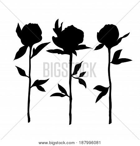 Sketch of black roses on a white background.