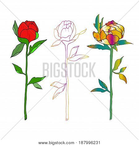 A sketch of colorful roses on a white background.