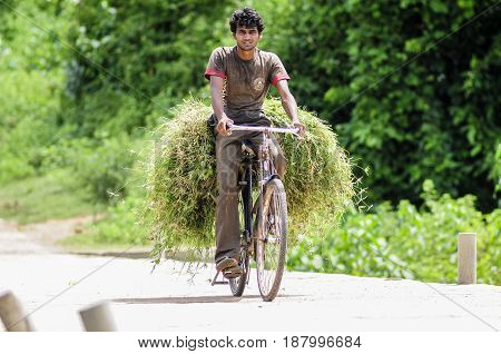 Khajuraho India september 17 2010: Young man transporting on his bicycle plants.