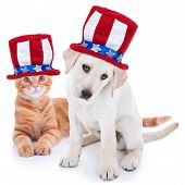 Patriotic happy American pet kitten cat and puppy dog animals wearing red white and blue Uncle Sam flag hat for July 4th, fourth, 4, USA election vote, Memorial, Independence, Labor and Presidents Day poster