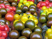 Yellow red and brown cherry tomatoes on bazaar in Tel Aviv Israel poster
