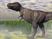 tyranosaurus reptile illustration poster