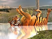 tiger bathing poster