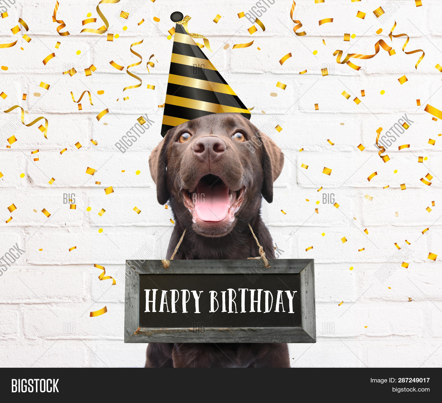 Dog With Party Hat Says Happy Birthday Text Board Around His Neck Congratulations Quote