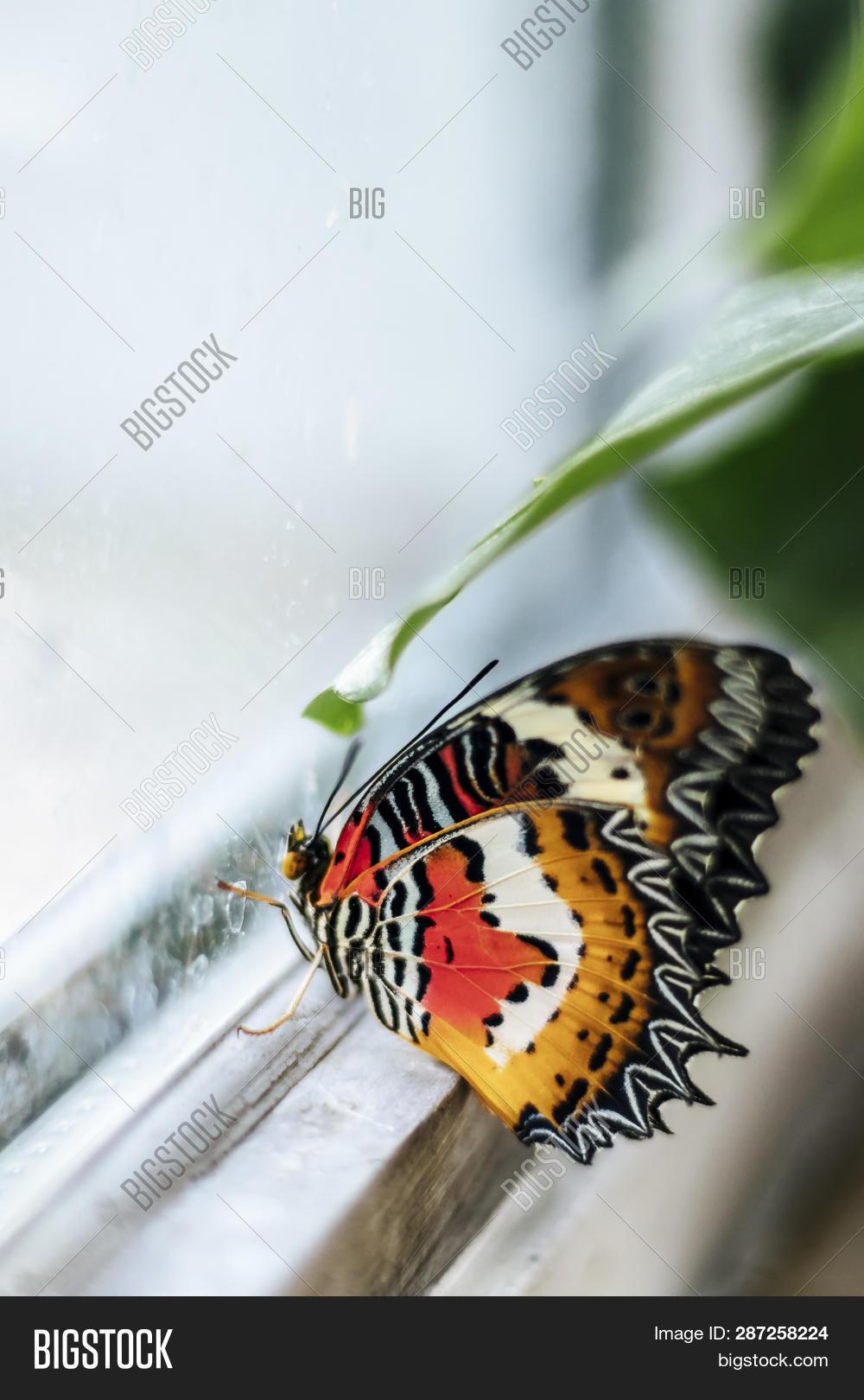 Close Nemo, Clown Fish Image & Photo (Free Trial) | Bigstock