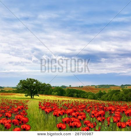 Country fields of flowers