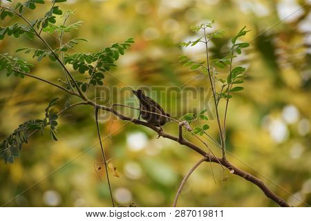 Sparrow Sitting On Tree. A Tiny Sparrow Sitting On The Branch Of A Tree Isolated On Blurred Green Tr