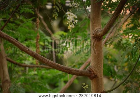 Tree With Dense Stem And Branches. A Stem Of A Tree Having Various Branches On It Accompanied With B