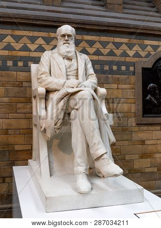 London, United Kingdom - January 3: The Statue Of Charles Darwin In The Natural History Museum On Ja