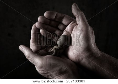 Male hands cradling a small fetus, digitally manipulated rubber fetus, human rights concept