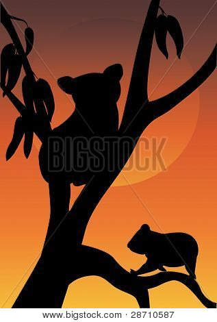 Two Koala In A Tree