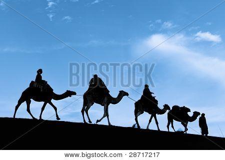 Silhouette of Camel Caravan in the Sahara Desert