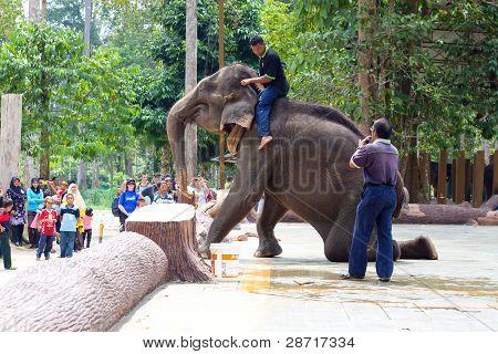 Elephant shows