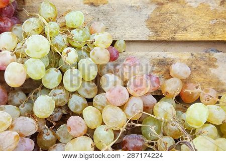 Close Up Fresh Juicy White Seedless Grapes On A Wooden Tray In The Market As Natural Background