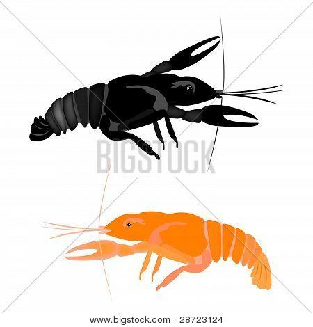 Animal river cancer on white background.Vector illustration poster