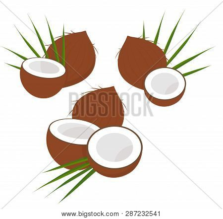 Coconut With Half And Leaves. Collection Of Diferent Coconut. Raster Illustration On White Backgroun
