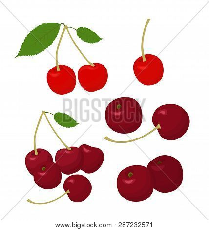 Cherries Collection. Cherry And Merry On White Background. Raster Illustration