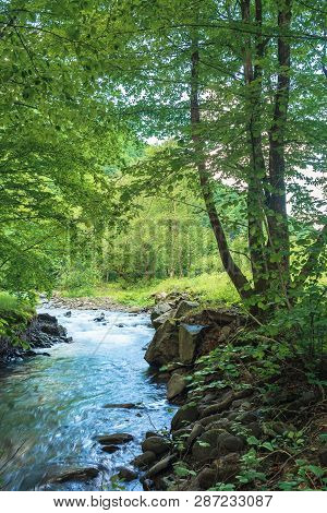 Small Creek With Rocky Shore In The Forest. Trees And Boulders On The Riverbank. Beautiful Nature Sc
