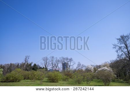 Springtime, A Park In Berlin With Trees And Blue Sky