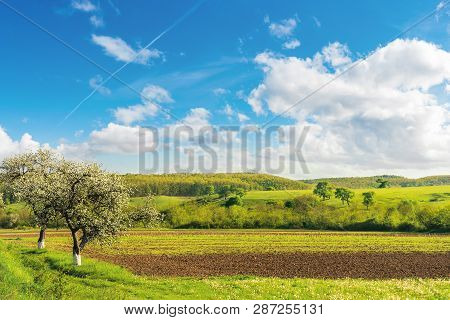 Rural Fields In Spring. Beautiful Countryside. Blossoming Trees. Wonderful Landscape With Grassy Rol