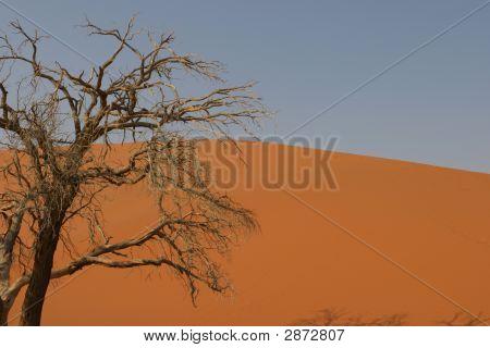 Desert Tree