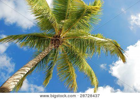 Classic Palm Tree