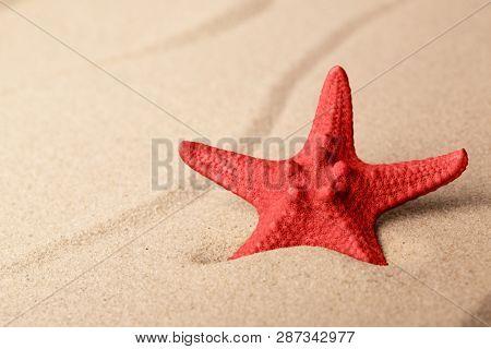 red starfish on sandy beach. One single seastar on rippled sand of tropical shore.
