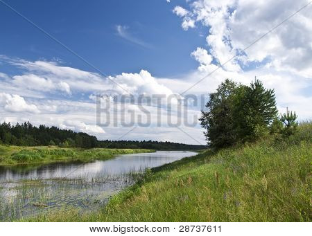 The River Mologa In The Summer.