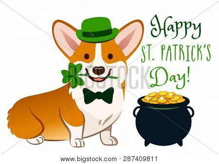 Cute Welsh Corgi Dog In St. Patrick's Day Costume: Green Bowler Hat And Bow Tie, Holding Shamrock In