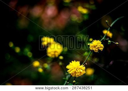 Spring Easter Background With Beautiful Yellow Flowers