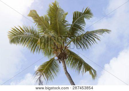 Tropical Palm Tree Panorama