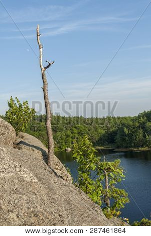 Tree Stump Growing Out Of Rocky Cliff Overlooking Long Pond And Ell Pond In Hopkinton, Rhode Island