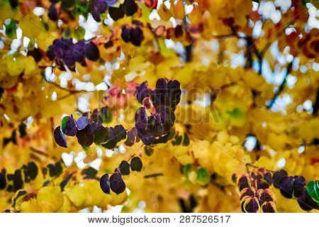 Bright Vivid Colorful Autumn Fall Leaves Changing Colors