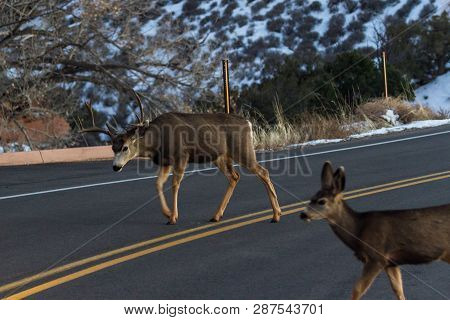Deer Crossing The Road